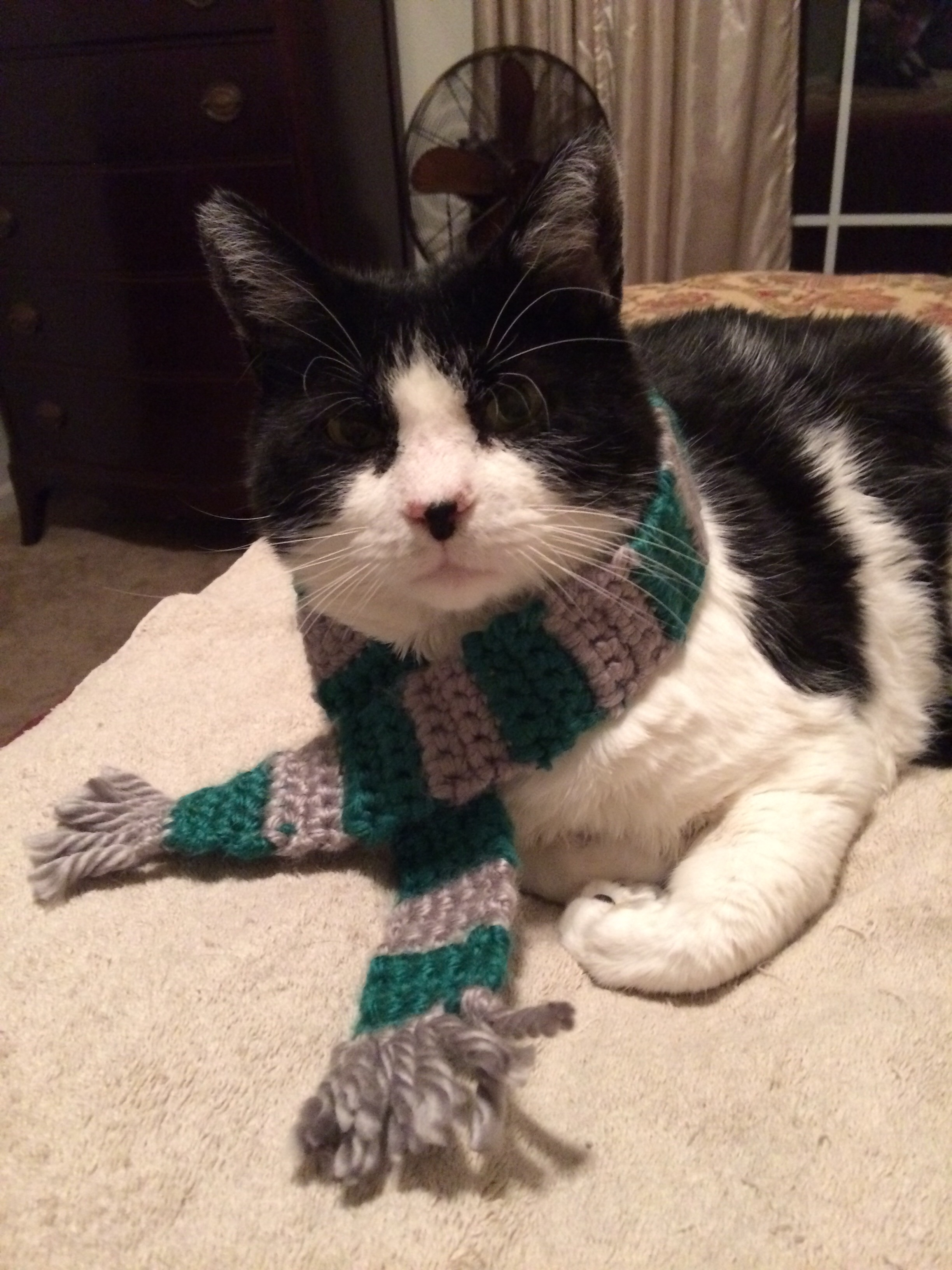 Squeaky Bob and his Slytherin Scarf
