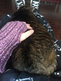 knit 4